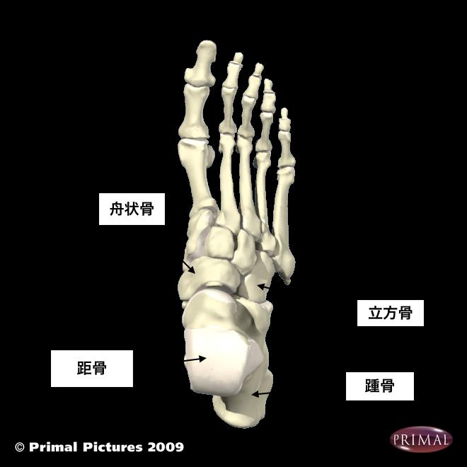 foot bonesのコピー