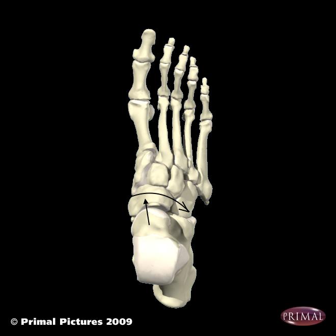 foot bonesのコピー2